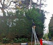 Hedge Trimming & Shrub Shaping